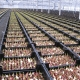 Bulbs in crates for hydroponic system